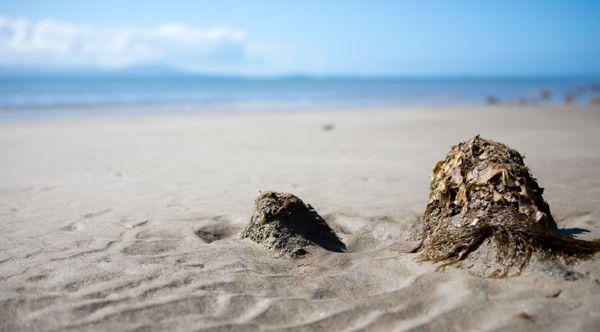 Beach Beauty thumbnail