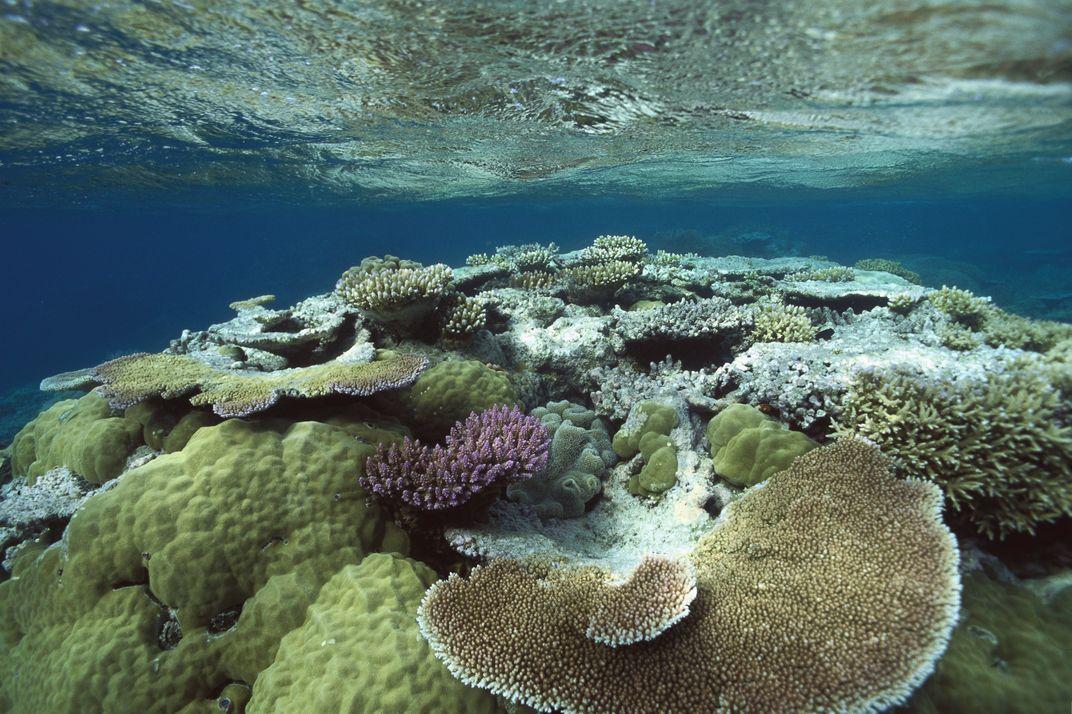 Great Barrier Reef Gets A Little Good News