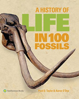 Preview thumbnail for video 'A History of Life in 100 Fossils