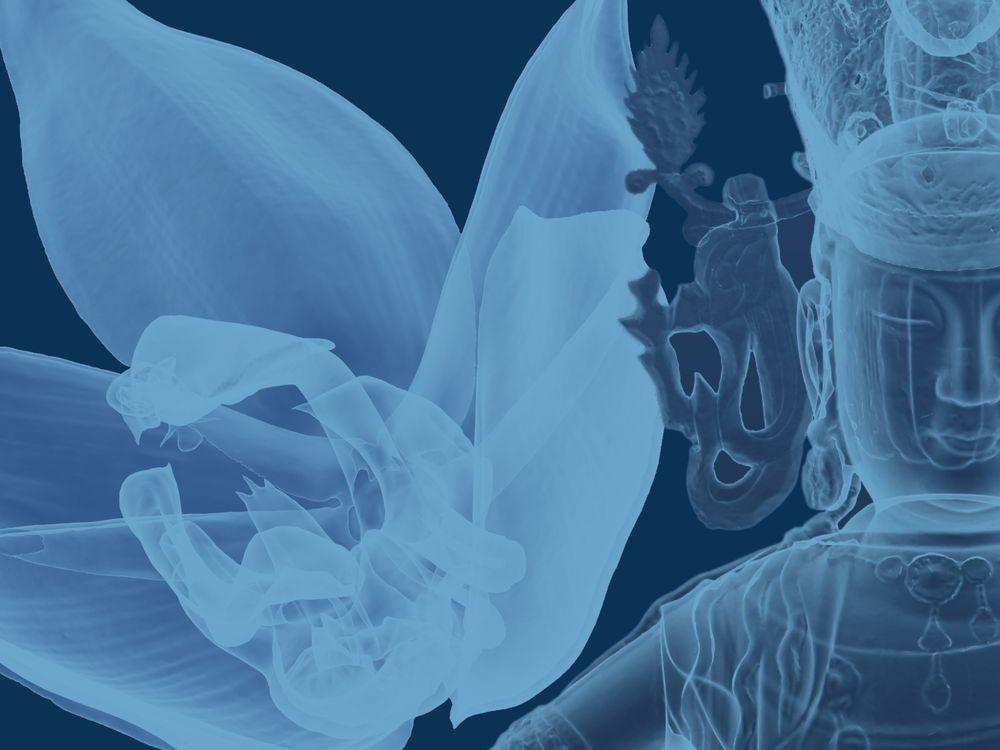 left to right: Herrenhauser Embreea Orchid (Embreea herrenhusana). Smithsonian Gardens; Bodhisattva Avalokiteshvara (Gwaneum bosal), Goryeo period, c. 1220–85. Freer Gallery of Art and Arthur M. Sackler Gallery, on loan from National Museum of Korea. 3D scanning data used to create this digital model generously provided by the National Museum of Korea.
