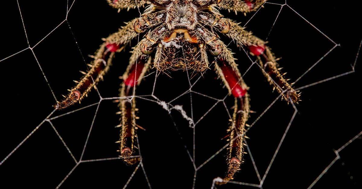 Fourteen Ways That Spiders Use Their Silk