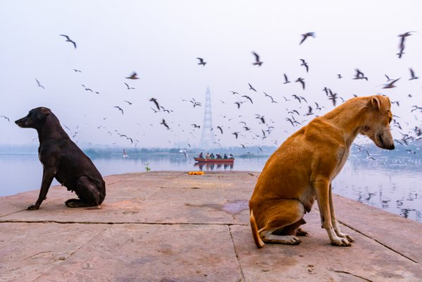 The gulls and the guards thumbnail