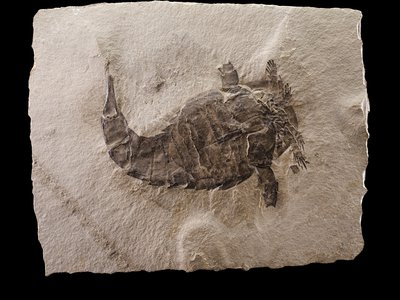 """In """"Deep Time,"""" curators used each fossil, including the sea scorpion Eurypterus lacustris, to weave a detailed timeline of Earth's history."""