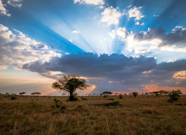 A Spectacular Serengeti Sunset thumbnail