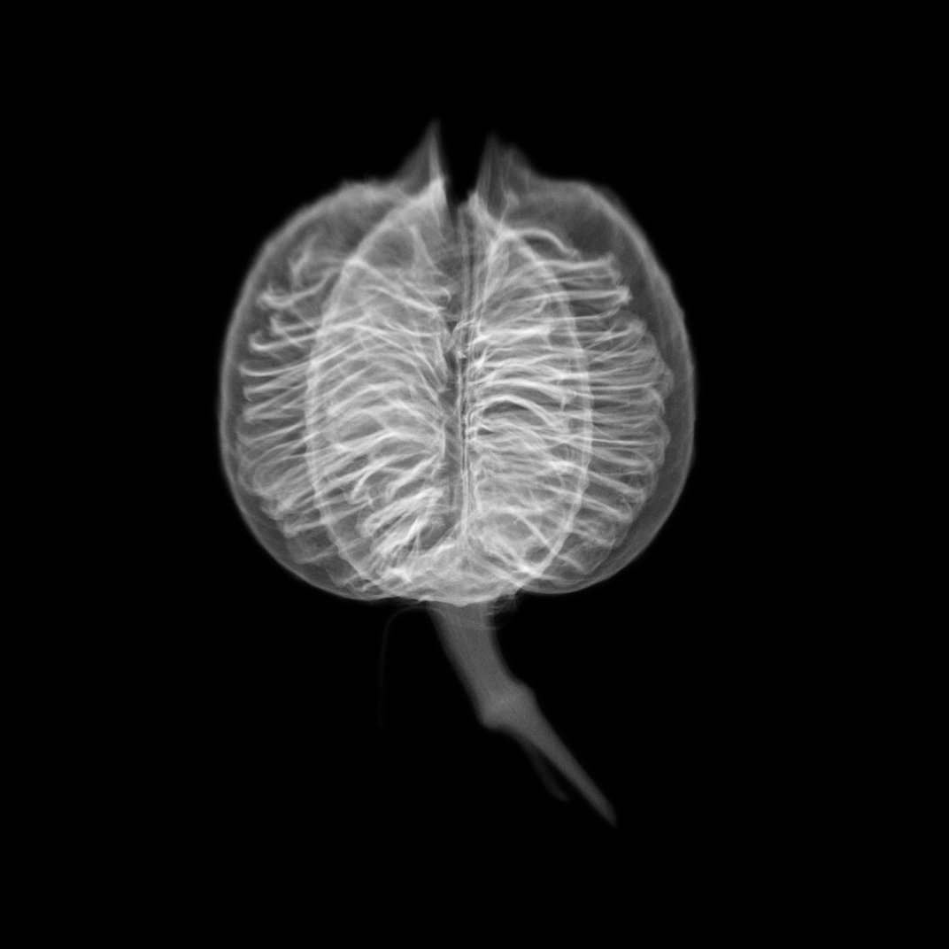 Dornith Doherty's Mesmerizing Photos Capture the Contradictions of Seed Banking