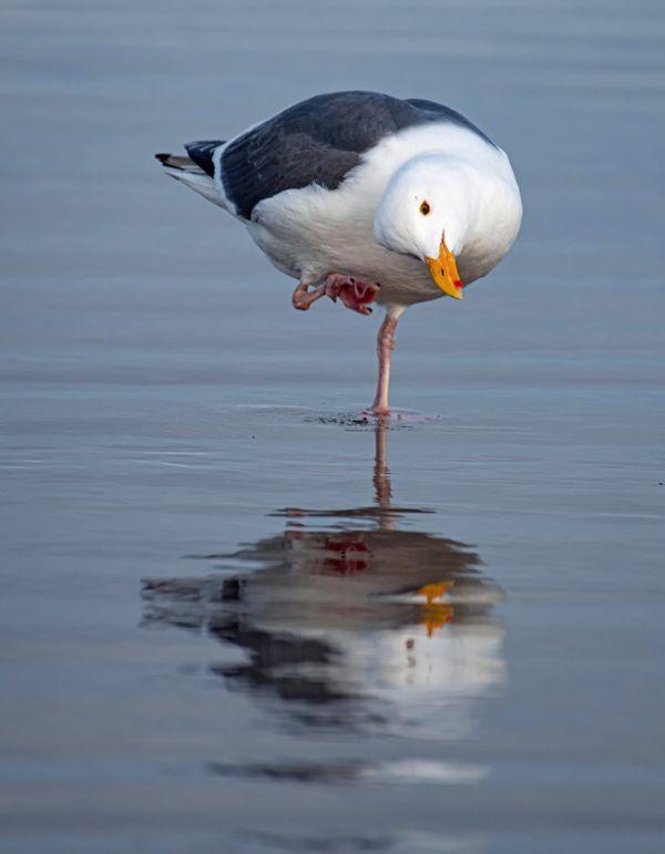 Gull Yoga thumbnail