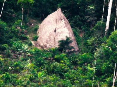A thatched hut in the Javari Valley