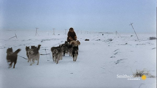 Preview thumbnail for A 600-Mile Journey Across Alaska Saves the Town of Nome