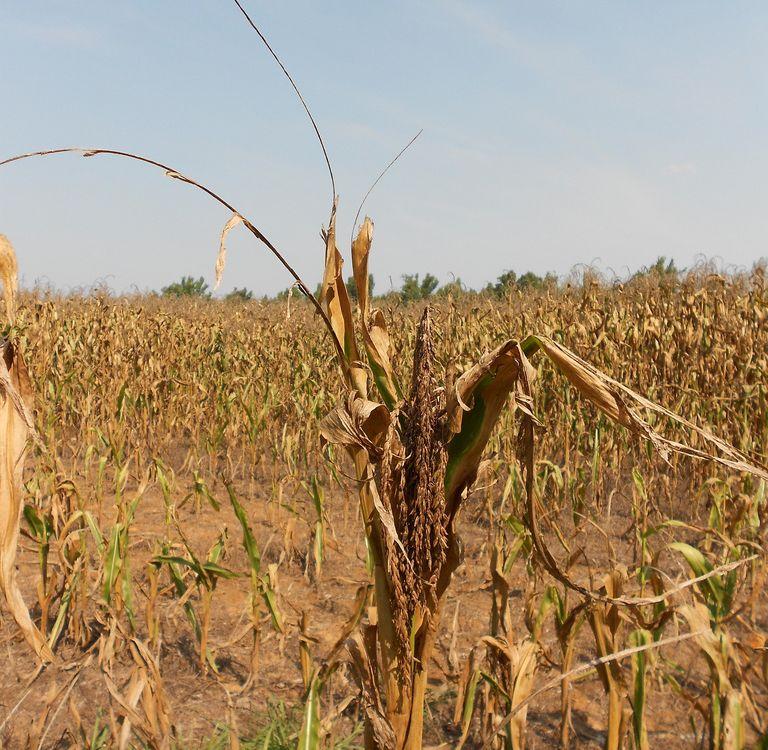 Drought in western Kentucky