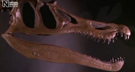 20111020010013baryonyx-skull-thumb.jpg