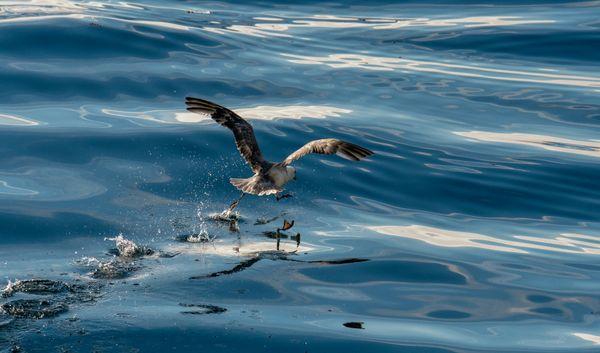Running bird thumbnail