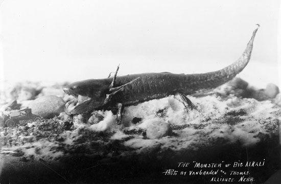 The monster of Big Alkali Nebraska