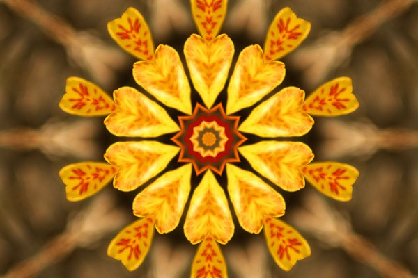 Canna Flower kaleidoscope thumbnail
