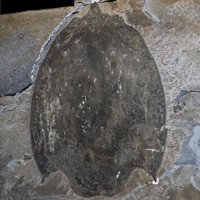 Ancient Predator With Massive Helmet-Like Shell Unearthed in Canada