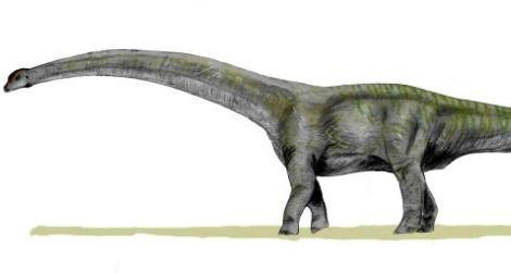 A restoration of Futalognkosaurus