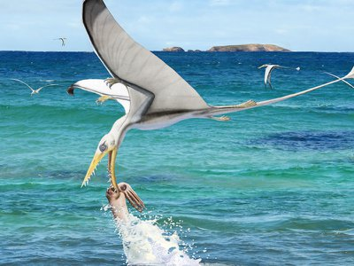 An artist's impression of a pterosaur trying and failing to snag a cephalopod from the ocean