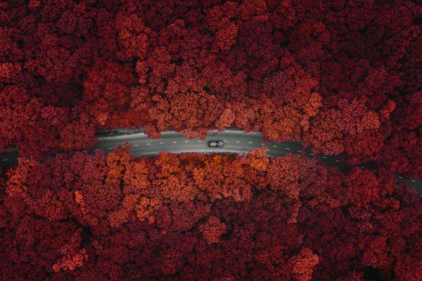 Fall Colors On Russky Island thumbnail