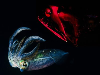 From glow-in-the-dark squid to the terrifying stoplight loosejaw, creatures of the deep have evolved their own living light time and time again.