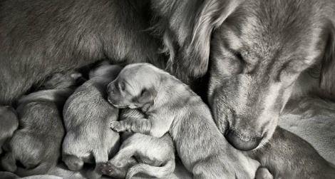 dog-babies-470.jpg
