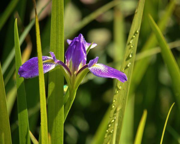 Good Morning. My Name is Iris. thumbnail