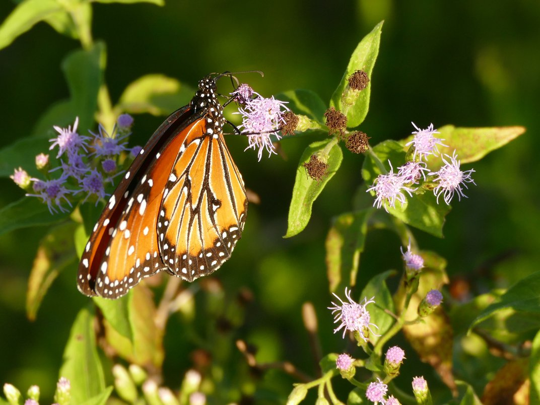 What I Learned Biking the 10,000-Mile Migration Route of Monarch Butterflies