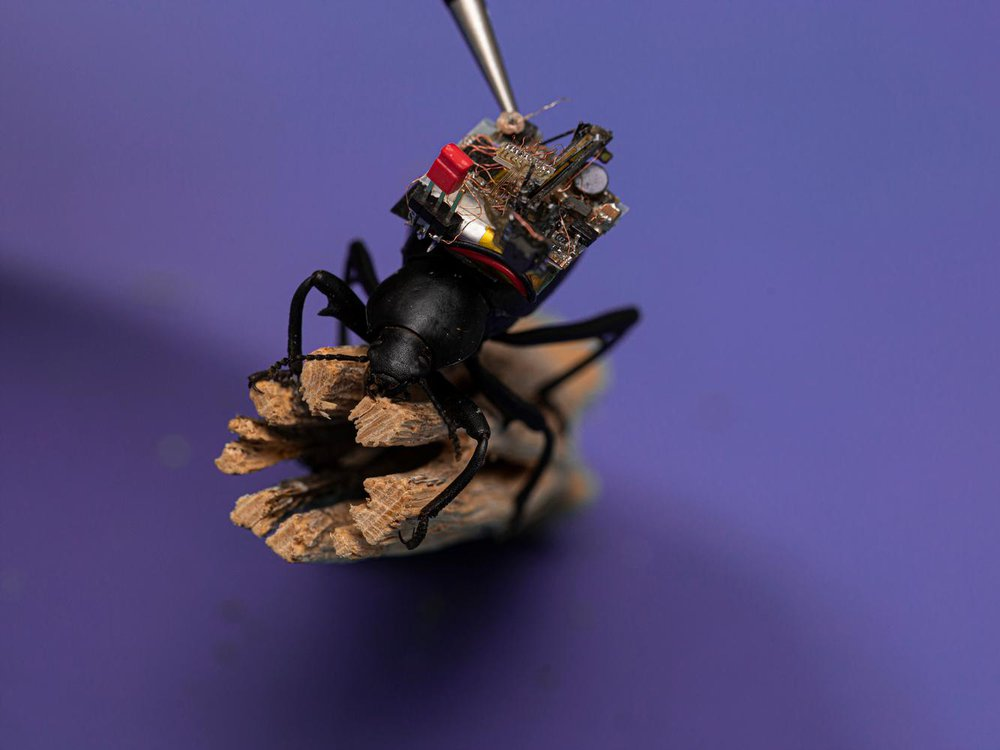beetle with camera