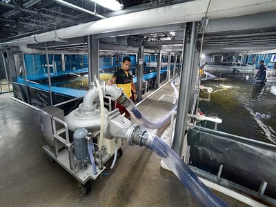 In Singapore, a city-state notoriously tight on space, Apollo Aquaculture Group is building an eight-story indoor aquaculture facility.
