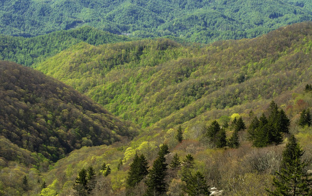 Early spring along the Blue Ridge Parkway, NC. (145/Jerry Whaley/Ocean/Corbis)