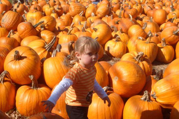 Sophie enjoys the sea of pumpkins thumbnail