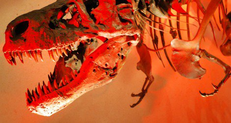 Were the arms of Tyrannosaurus adapted for catching and inspecting fish? No way.