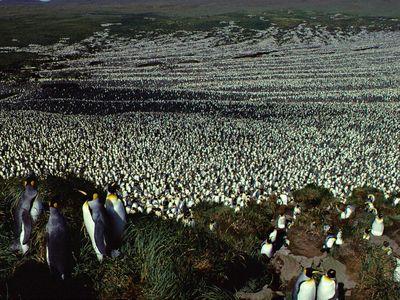 The Morne du Tamaris Colony in happier days in 1982.