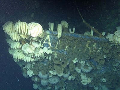 The American Heritage is enjoying a new lease on life as an artificial reef home to hundreds of deep-sea sponges and other marine creatures