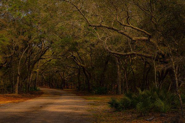 Enchanted - ©Frances Quinlivan - Nikon D750 thumbnail