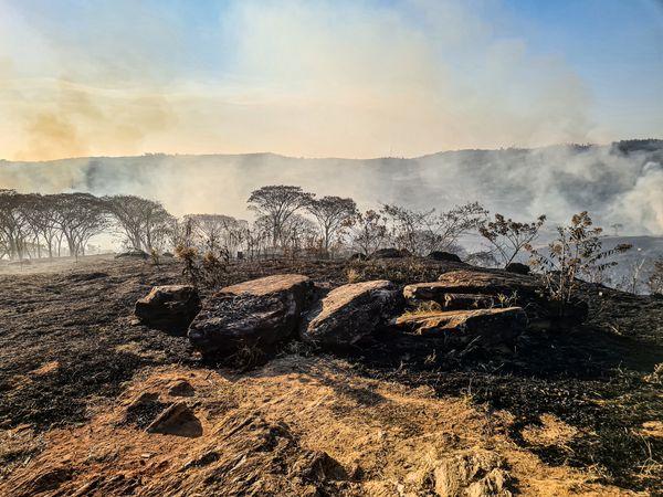 Burned nature thumbnail