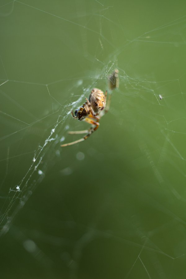 Spider in its Web  thumbnail
