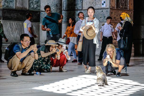 Gli, the Hagia Sophia cat thumbnail