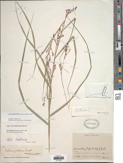 A dried plant on paper.