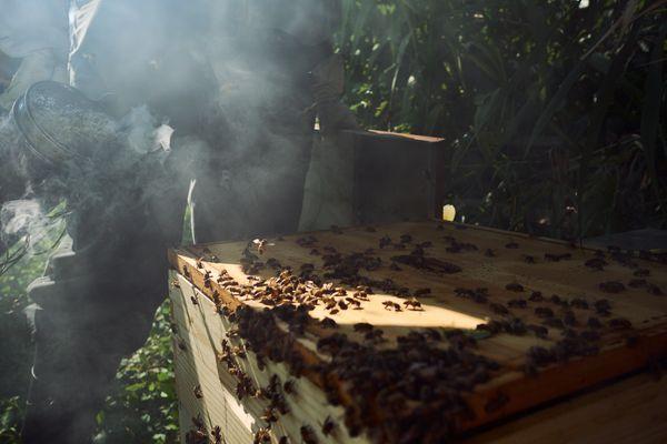 Hive smoke thumbnail