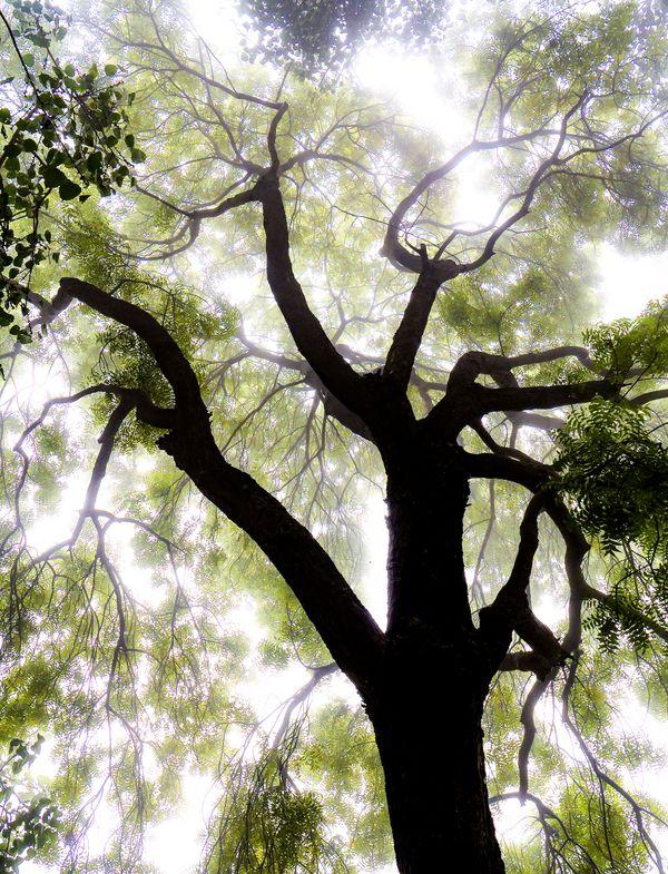 Enlightened Tree thumbnail