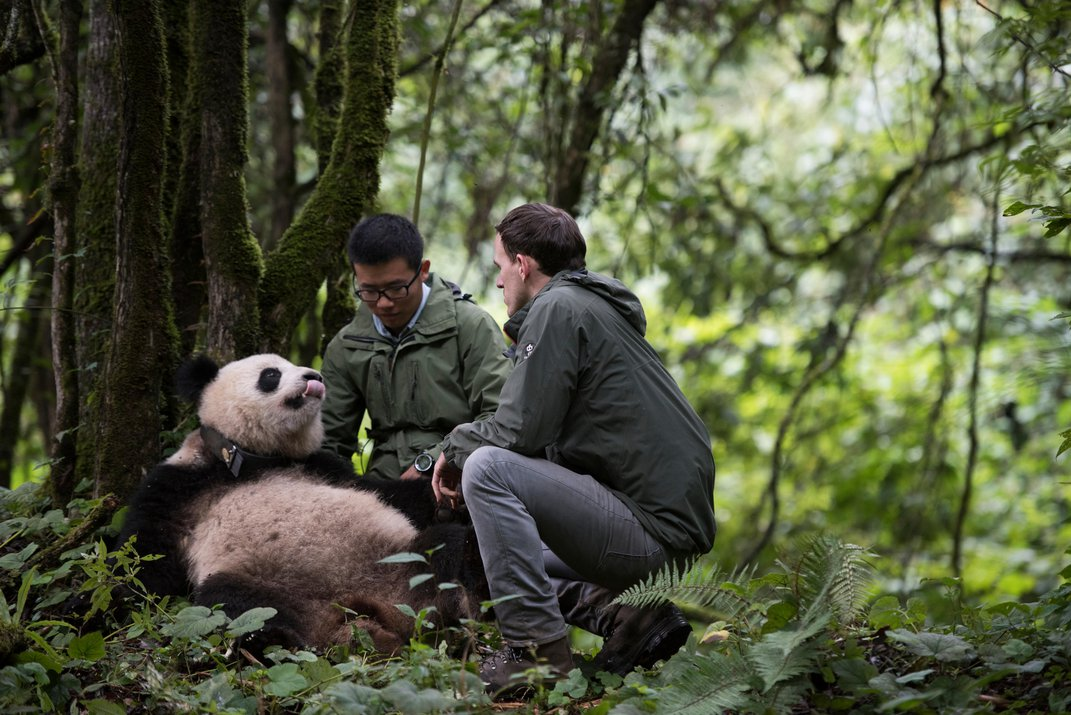 The Science Behind the Unbearably Cute IMAX Movie