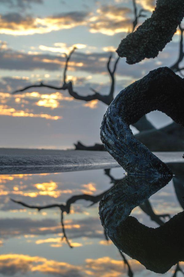 Driftwood Sunrise thumbnail