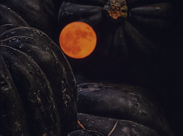 Pumpkin Harvest Moon thumbnail