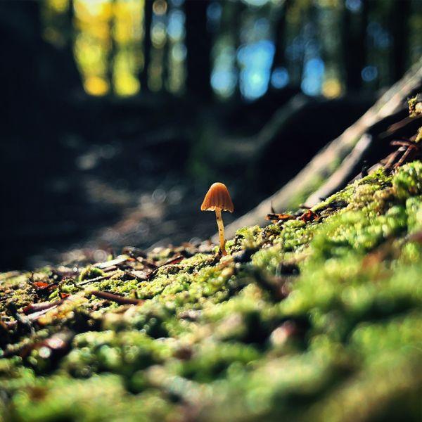Microscopic Mushroom thumbnail