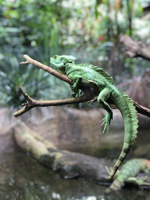 The Green Reptile thumbnail