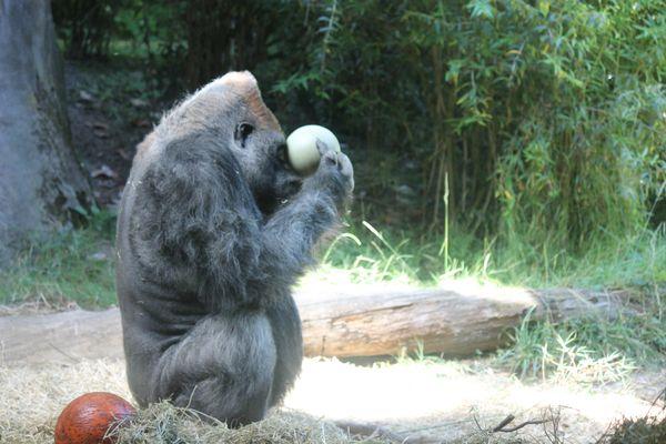 funky monkey thumbnail