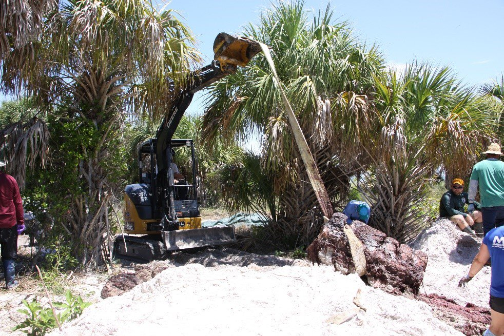 A yellow and black excavator digs into the white sand in the Florida everglades to uncover a decomposing whale skeleton that will be transported to the Smithsonian's National Museum of Natural History for storage..
