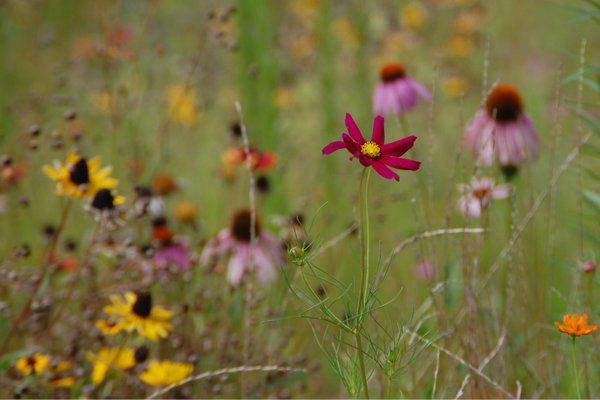 Standout Wildflower thumbnail