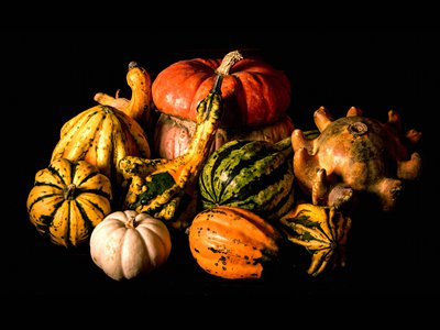 Gourds come in all shapes and sizes—some sweet and delicious, some stiff and bitter, and some that are just plain odd.