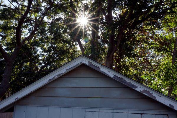 Sunburst peaking through the trees thumbnail