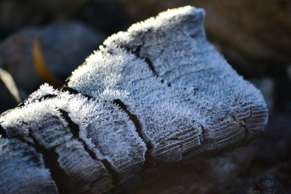 Frosted Over Driftwood thumbnail
